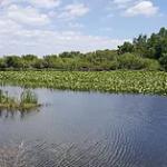 lake-gallery